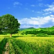 Green fields, the blue sky and tree - Foto Stock