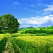 Green fields, the blue sky and tree - Stock Photo