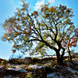 Tree under the deep blue sky - Foto Stock