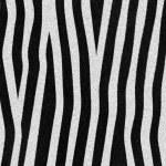 Zebra texture — Stock Photo