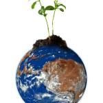 Baby växtodling från jorden — Stockfoto