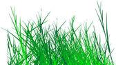 Grass vector — Stock Vector