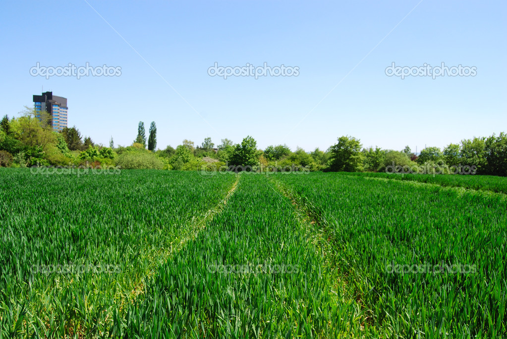 Lush crop - cultivated field  Stock Photo #2069784