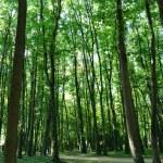 ������, ������: Sun lit trees in Saint Denis park
