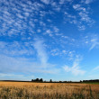Wheat fields and cloudscape — Stock Photo