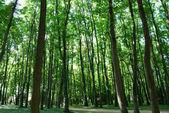 Sun lit trees in Saint Denis park — Stock Photo
