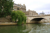 Green willow on Seine embankment — Stockfoto