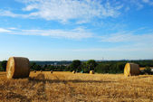 Hay field with round haystacks — Stock Photo
