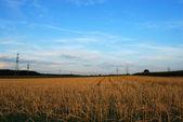 Blue sky over hayfield — Stock Photo
