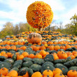 Heap of pumpkins and pumpkin sphere — Stock Photo
