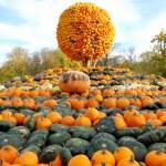 Heap of pumpkins and pumpkin sphere — Stock Photo