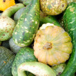 Heap of green pumpkins - Foto Stock