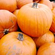Stock Photo: Heap of large orange pumpkins