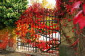 Iron gate and red leaves — Stock Photo