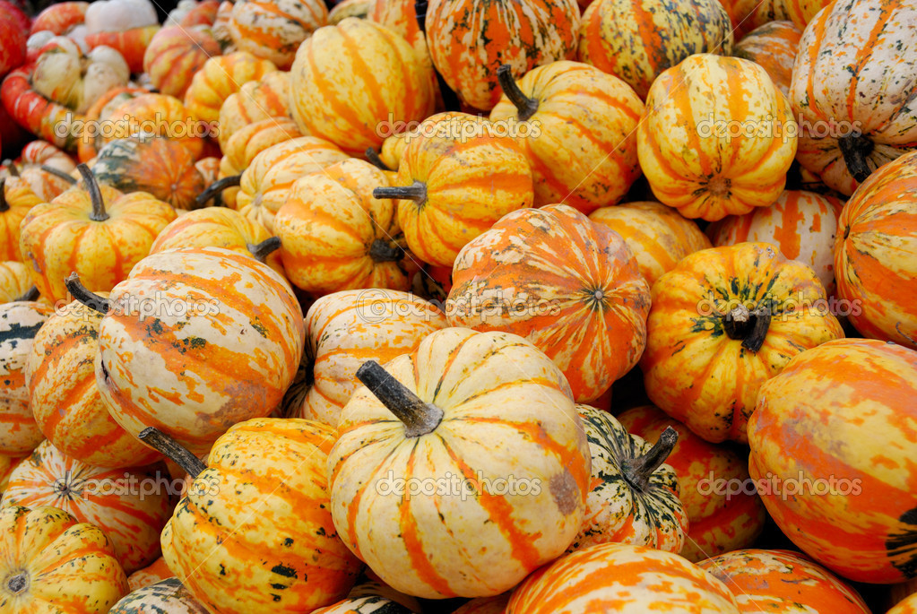 Heap of yellow striped pumpkins for retail sale — Stock Photo #2081121