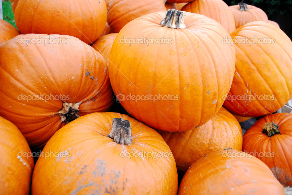 Heap of large orange pumpkins for retail sale — Stock Photo #2081396