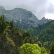 Stock Photo: Alps forest and tower of Neuschwanstein