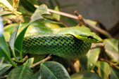 Green snake on the branch — Stockfoto