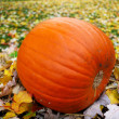 Stock Photo: Big pumpkin on the green grass