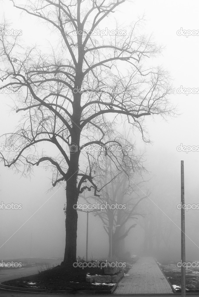 Foggy lane and bare trees — Stock Photo #2100800