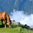 Horse mountain — Stock Photo