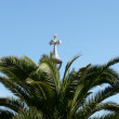 Palm and crucifix — Stock Photo