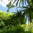 Palm in tropical jungle — Stock Photo