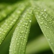 Droplets on leafs — Stock Photo #2093968