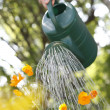 Watering — Stock Photo