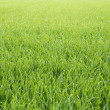 Grassy background - Stock Photo