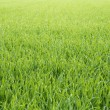 Grassy background — Stock Photo