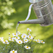 Watering — Stock Photo #2111696