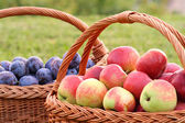 Apples and Plums — Stock Photo