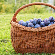 Plums in a basket — Stock Photo #2198748