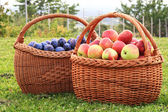 Apples and plums in baskets — Stock Photo