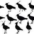Royalty-Free Stock Vector Image: Lapwings collection
