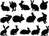 Collection of bunny — Stock Vector