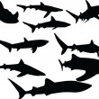 Stock Photo: Sharks collection