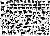 Animal of africa — Stock Vector