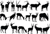 Antelopes collection — Stock Vector