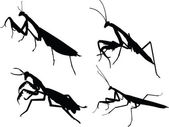 Devotee bug silhouette — Stock Vector