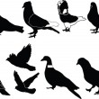 Royalty-Free Stock Vektorgrafik: Pigeons collection