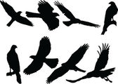 Goshawk silhouette collection — Stock Vector