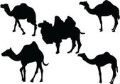 Camels collection — Stock Vector