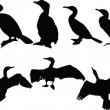 Cormorants collection - Stock Vector
