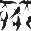 Stock Vector: Swallows collection