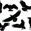 Eagles collection - Stock Vector