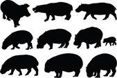 Hippopotamuses collection — Stock Vector