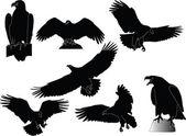Eagles collection — Stock Vector