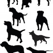 Royalty-Free Stock Vector Image: Dogs collection
